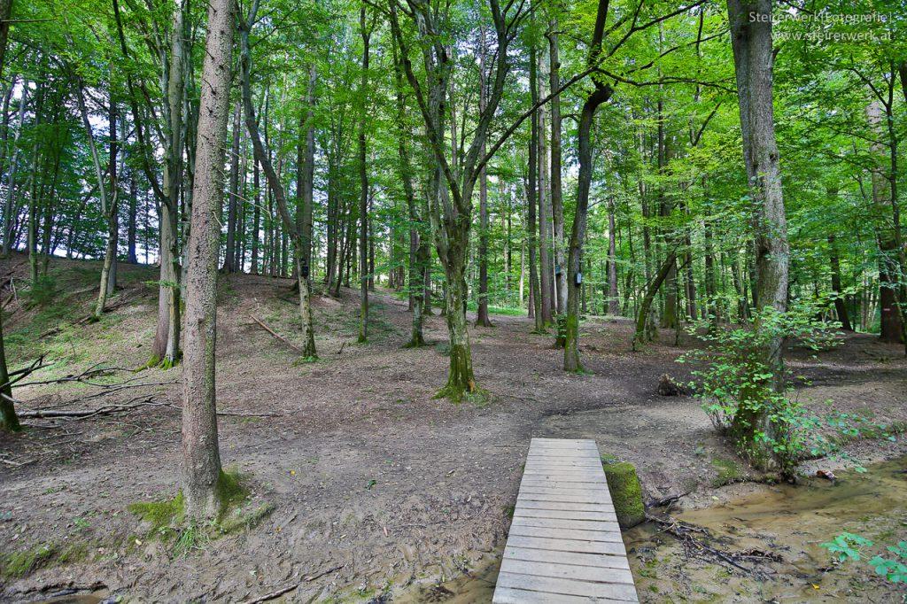 Rettenbachklamm Wald